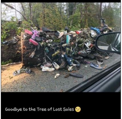 Tree of Lost Soles down.JPG